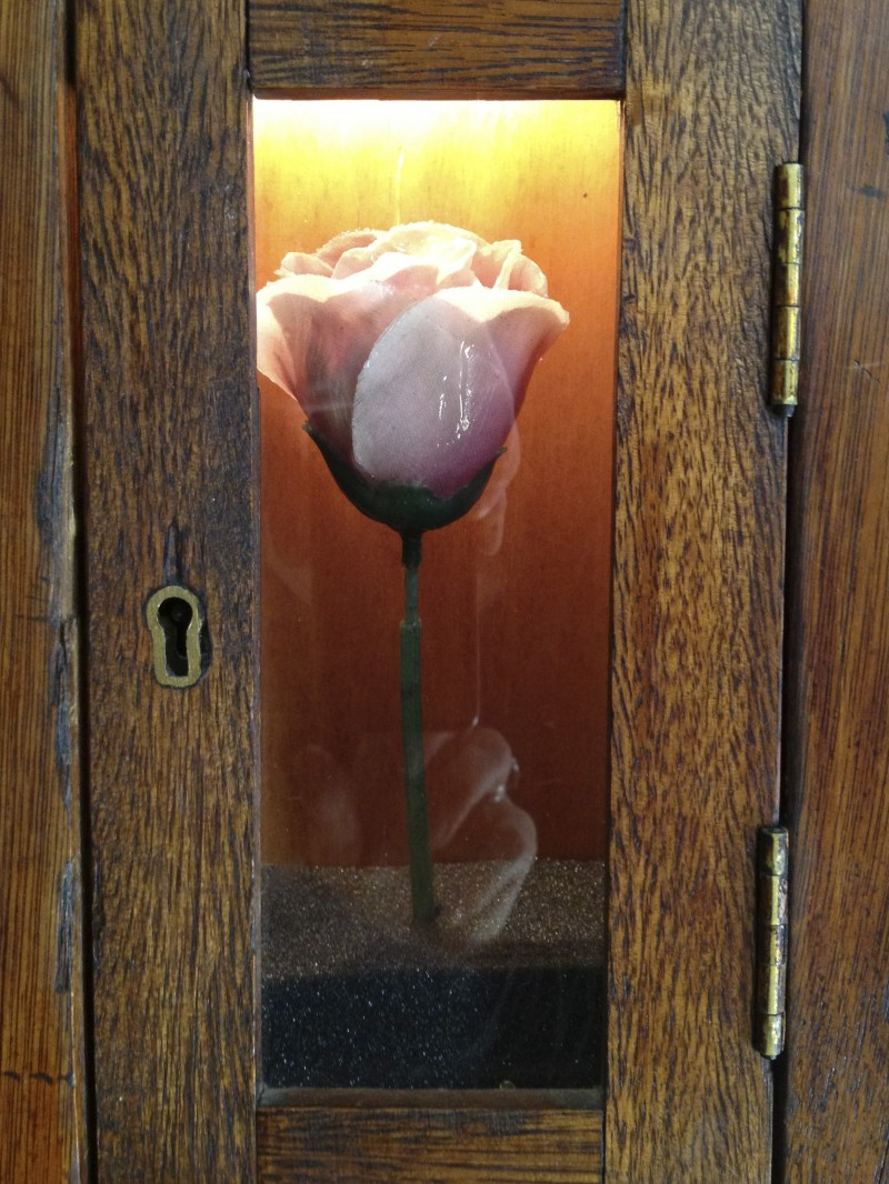 Pink Rose in box by